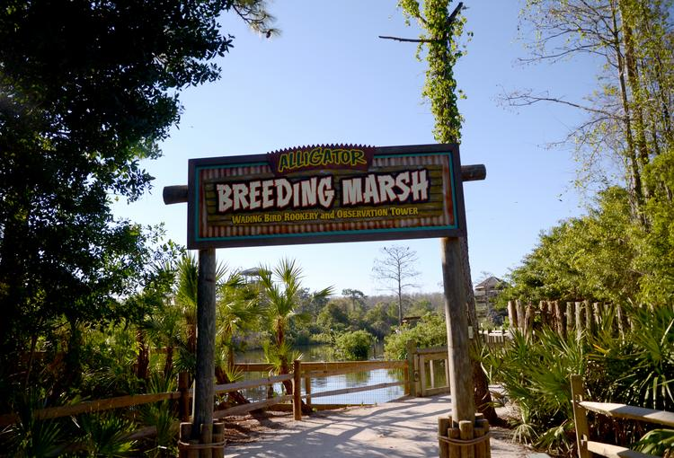 This is where it all happens. Resident alligators and visiting bird species congregate for species propagation at the Gatorland Breeding Marsh.