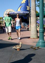 Even Donald Duck's family loves Star Wars Weekends. The cast member discount pays off.