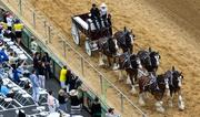 The Suttler Post Farm Clydesdales make their way around the track for the crowd at Pimlico Race Course on Saturday.