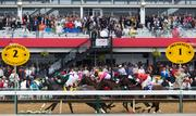 The Allaire Dupont Distaff Stakes undercard race near the finish at Pimlico Race Course on Saturday.