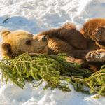 Bears hibernate, venture capitalists follow these 3 steps to prepare for winter