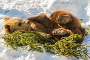 Bears hibernate, venture captitalists follow these 3 steps to prepare for winter