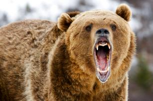 Bears versus computers and 8 other stories to educate and enthrall