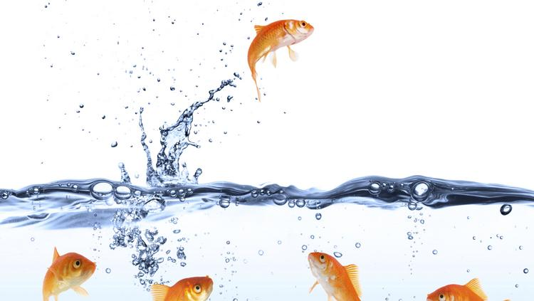 Target has has kept details of its Goldfish project under wraps as it hires engineers.