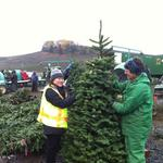 How Oregon plans to reverse Hawaii's Christmas tree rejection