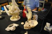 These objects were created by a 3-D printer. The skull-half was based on an MRI scan from an actual human head.