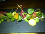 Cool Roasted Beets with fromage blanc and Sausalito watercress and yuzu