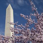 D.C.'s Washington Monument reopens after nearly 3 years of repairs