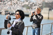Tourists take photos during the peak of the National Cherry Blossom Festival in March 2012.