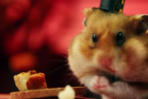 Hamster Eating Pie