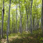 Viewpoint: Wood pellet demand in U.K. holds promise for Georgia's forest industry