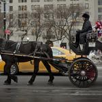 Who is to blame for the horse-carriage compromise collapse?