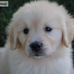 GoDaddy's Super Bowl puppy has a new name, and it's...