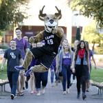 GCU may ditch stock market to be private educator again