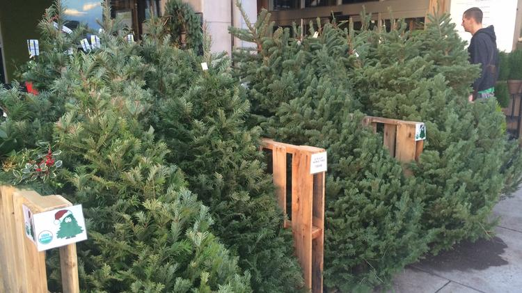Does Your Christmas Tree Need A Slogan Clark County Grower Thinks