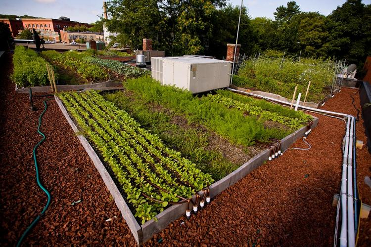 Recover Green Roofs has installed a similar, but smaller, rooftop garden at Ledge Kitchen & Drinks, a restaurant in the Lower Mills section of Dorchester.