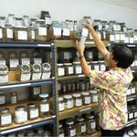 Proposed regulation of herbal therapists is unwarranted, state auditor says