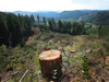 Weyerhaeuser's NW timber grab ups holdings by 33%