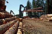 A loader from Cross & Crown Inc. sorts logs by size at the Last Ride logging site in the forest above Hagg Lake. The logs will be trucked to Stimson Lumber Co.'s Gaston mill.