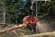 A freshly cut tree is stripped of limbs and bark at the Last Ride logging site on Stimson Lumber Co. land.