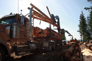 A loader lifts logs onto a truck at the Last Ride site. The logs will be taken to Stimson Lumber Co.'s Gaston mill and turned into lumber to be sold at Home Depot.