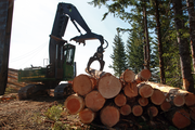 Logs are arranged by size at Cross & Crown Inc.'s Last Ride logging site.