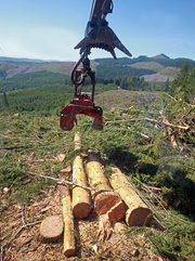 Contract logging is an expensive business. The head of the processor that sheers off limbs and bark costs about $250,000.