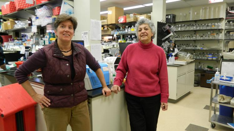 Wistar's Maureen Murphy and Penn's Donna George are working with GlaxoSmithKline on an experimental cancer treatment.