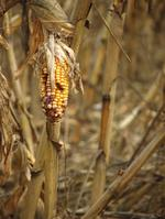 Climate change putting Ohio farmers and manufacturers at risk, report says