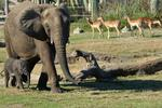 Nonprofit of the Year 2013: Lowry Park Zoo