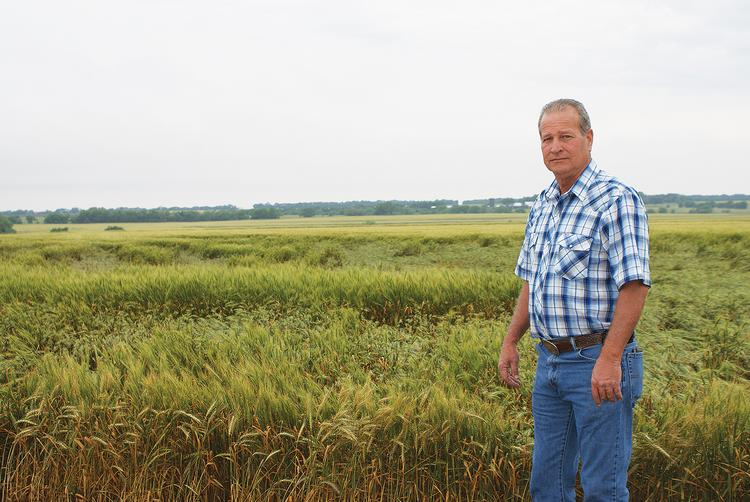 Scott Van Allen stands on the edge of a wheat field on his property in Sumner County, south of Clearwater. Van Allen had record yields of 55 bushels an acre in 2012, and he thinks he could top that this year.