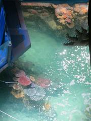 An overhead view of a coral formation inside the Blacktip Reef exhibit set to debut July 10 at Baltimore's National Aquarium.