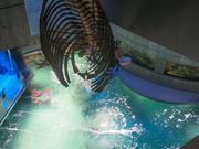 A view of the $12.5 million Blacktip Reef exhibit from the fourth-level of the National Aquarium. A whale skeleton hangs above.