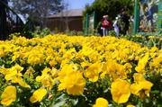 A yellow brick road of flowers in an Oz-themed area of the festival.