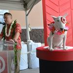 First look at Target's new Kailua store: Slideshow