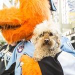 Milwaukee Admirals going to the dogs again this Sunday