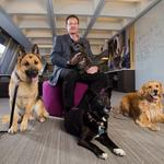 Top dogs: Why Nestlé Purina PetCare is consistently a best place to work.