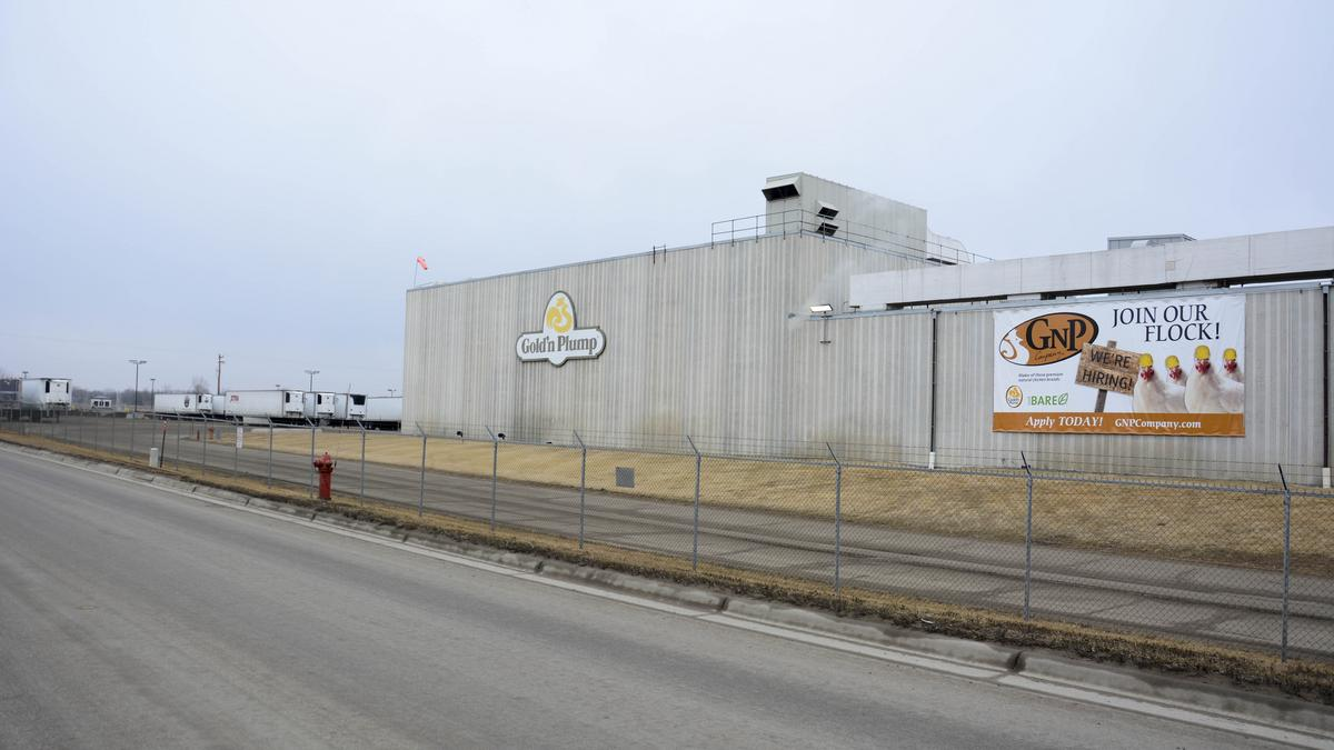 to staff minnesota poultry plant  gnp will fly in foreign workers   st  paul