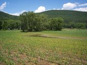 Middleburgh's Barber's Farm, 500 acres in the heart of the Schoharie Creek basin area