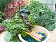 Swiss chard, beet greens and kale from Barber's Farm