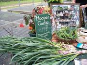 Garlic, green onions skates and other breath mints from Hooper Garlic in Fultonham