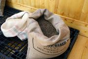 McNelly orders green coffee beans in these large burlap sacks for roasting.