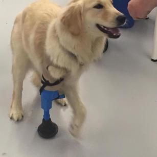 This three-legged dog got a helping ... paw ... from a 3-D printing lab