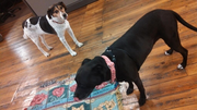 """@VirginiaBiz tweeted, """"Dogs are starting to arrive for #takeyourdog to work day! @takeyourdog #WBJdogs pic.twitter.com/HjzbkkFSCH."""" Friday is Take Your Dog to Work Day."""