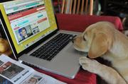 """Until he is """"office broken,"""" 10-week-old Miles Lawton-Prosise will have to telecommute on Take Your Dog to Work Day. Miles is the very new addition to WBJ photographer Joanne S. Lawton's house."""