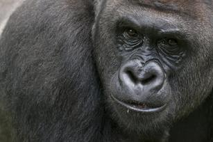 Got an 800-pound gorilla in your market? 5 ways to thrive