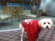 Cody Lampert is working hard at WBJ. He is pup to WBJ social engagement manager Jacqueline Lampert. Friday is the 15th annual Take Your Dog to Work Day.