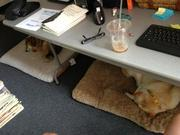 """@Andrew_HillRag tweeted, """"@WashBizOnline My dogs work with me everyday at Capital Community News. They are even on our office lease! pic.twitter.com/KCa38Ov0sG."""" Friday is the 15th annual Take Your Dog to Work Day."""