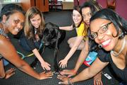 Kelley Drye employees play with dog Magellan during Friday's 15 annual Take Your Dog to Work Day.