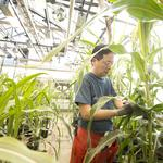 Novozymes-Monsanto partnership means 500k trials in the U.S.